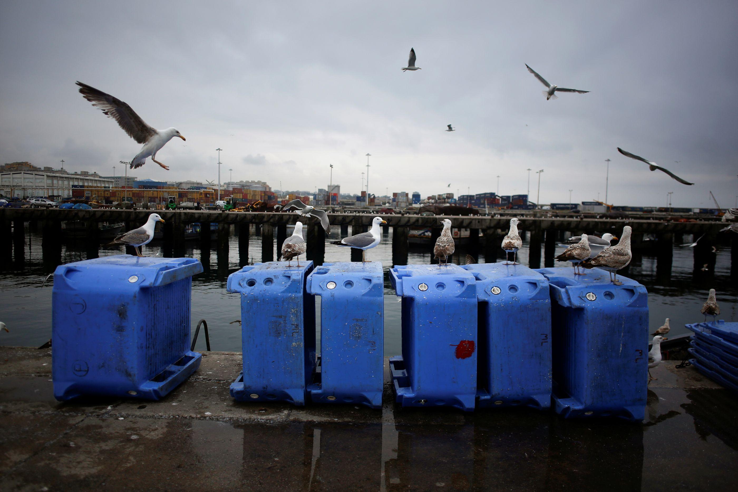 As sardinhas estão a fugir de Portugal e a Reuters já deu conta