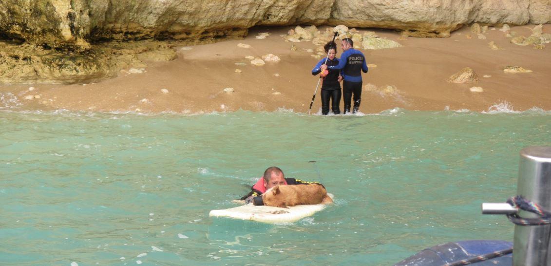 Cão de um ano resgatado de zona sem acesso terrestre