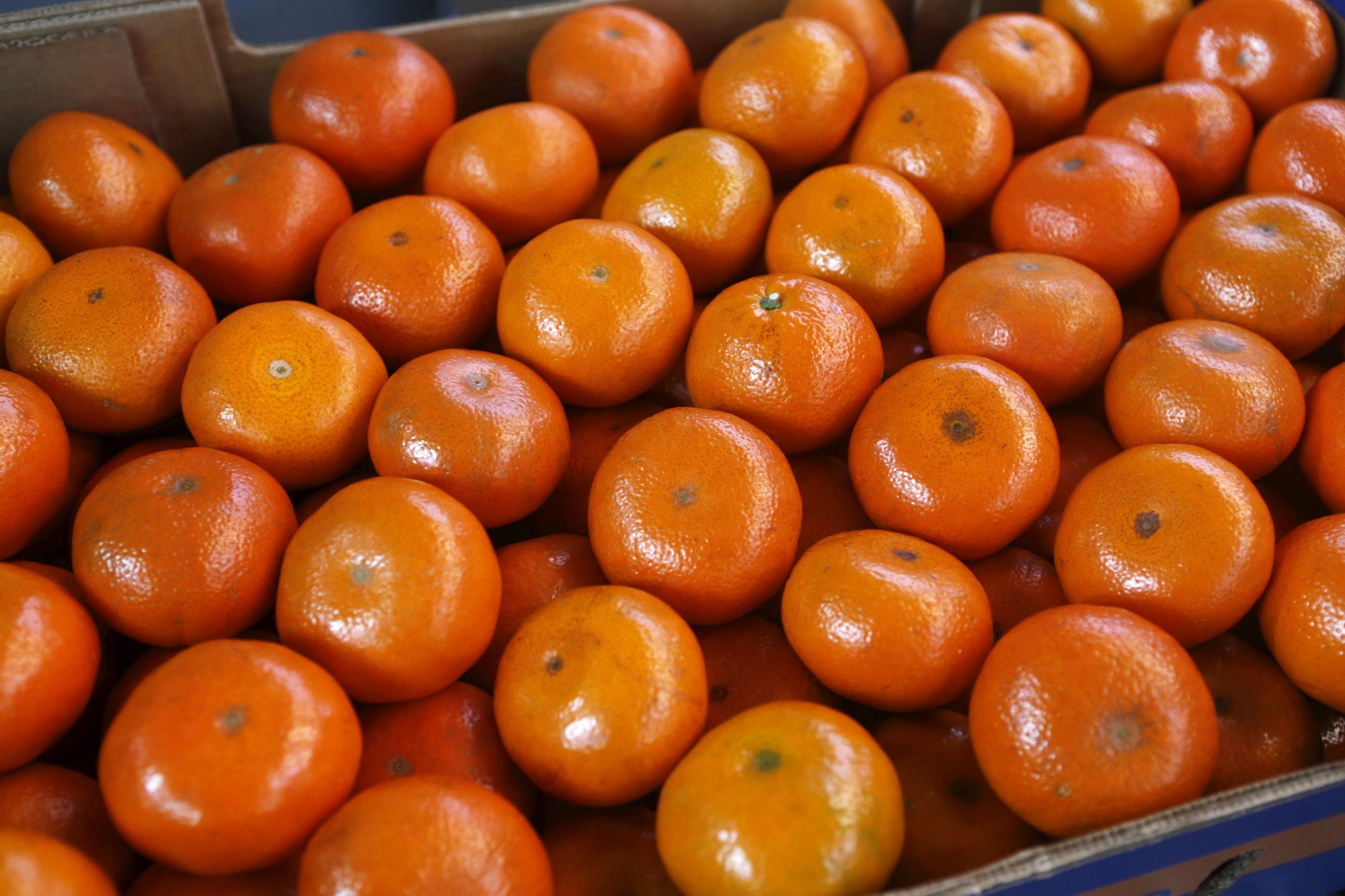 Coreia do Sul entrega milhares de tangerinas a Pyongyang