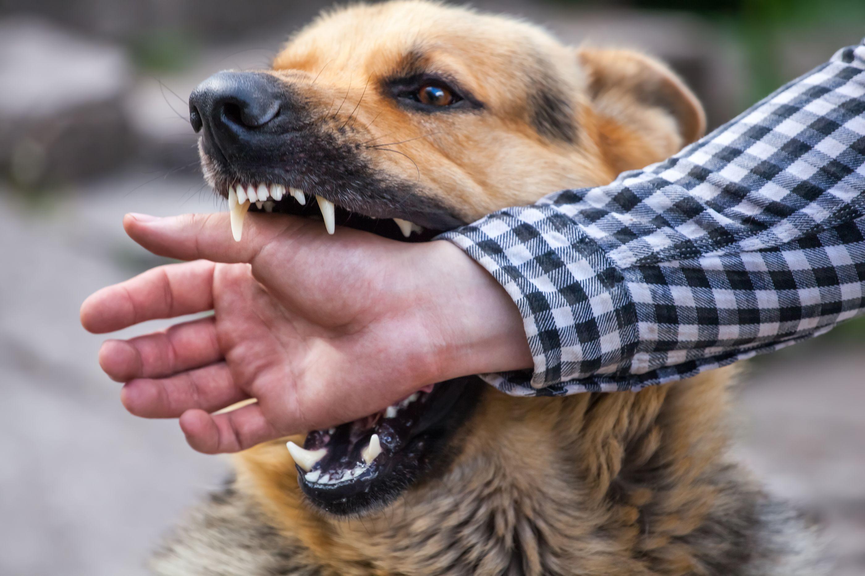 Informação e tempo são tudo na prevenção: Conheça os sintomas da raiva