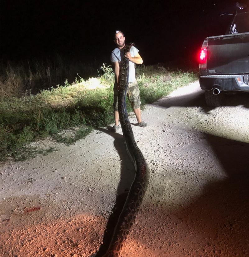 Caçador apanha píton de tamanho recorde nos Everglades