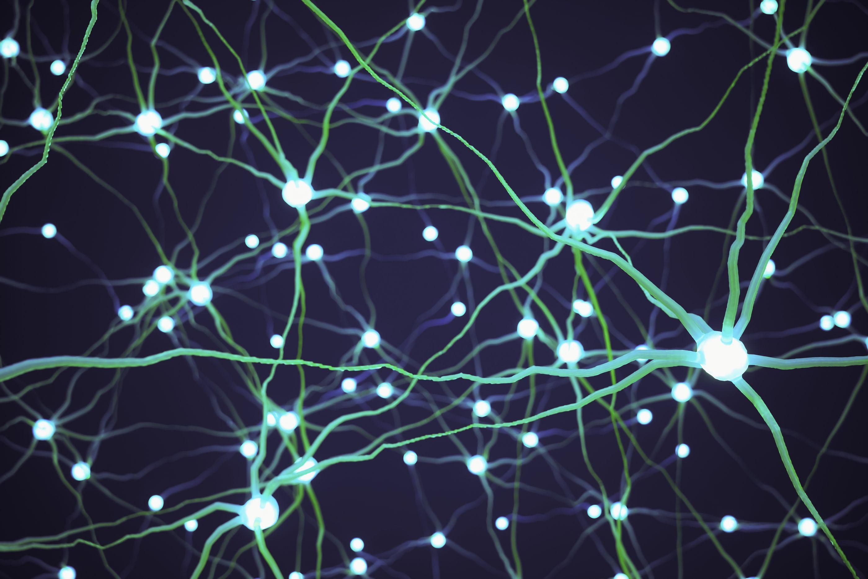 Nervo pneumogástrico: O que é, para que serve e outros esclarecimentos