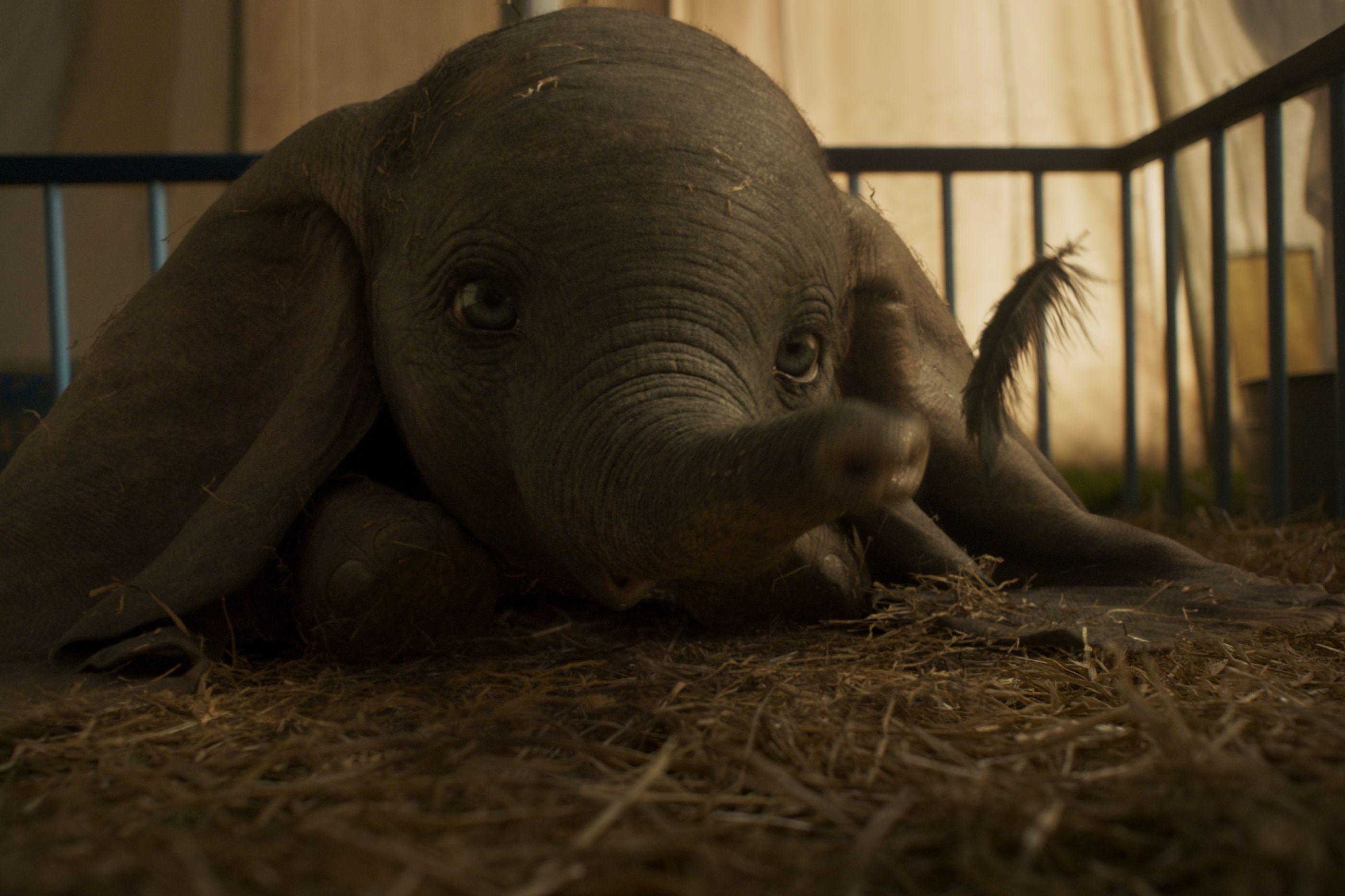 Revelado trailer do filme 'DUMBO' com carimbo de Tim Burton