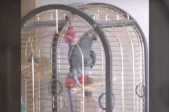 Papagaio imita alarme de incêndio e causa chamada de emergência