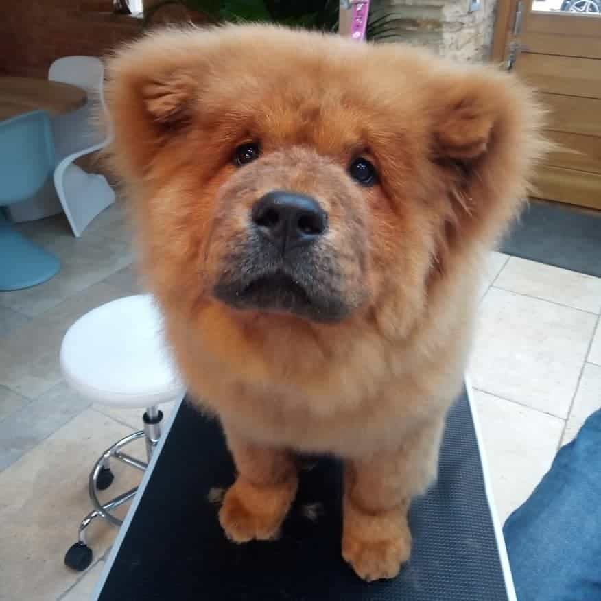 Este cão mordeu um polícia. E foi condenado a nove meses de 'prisão'