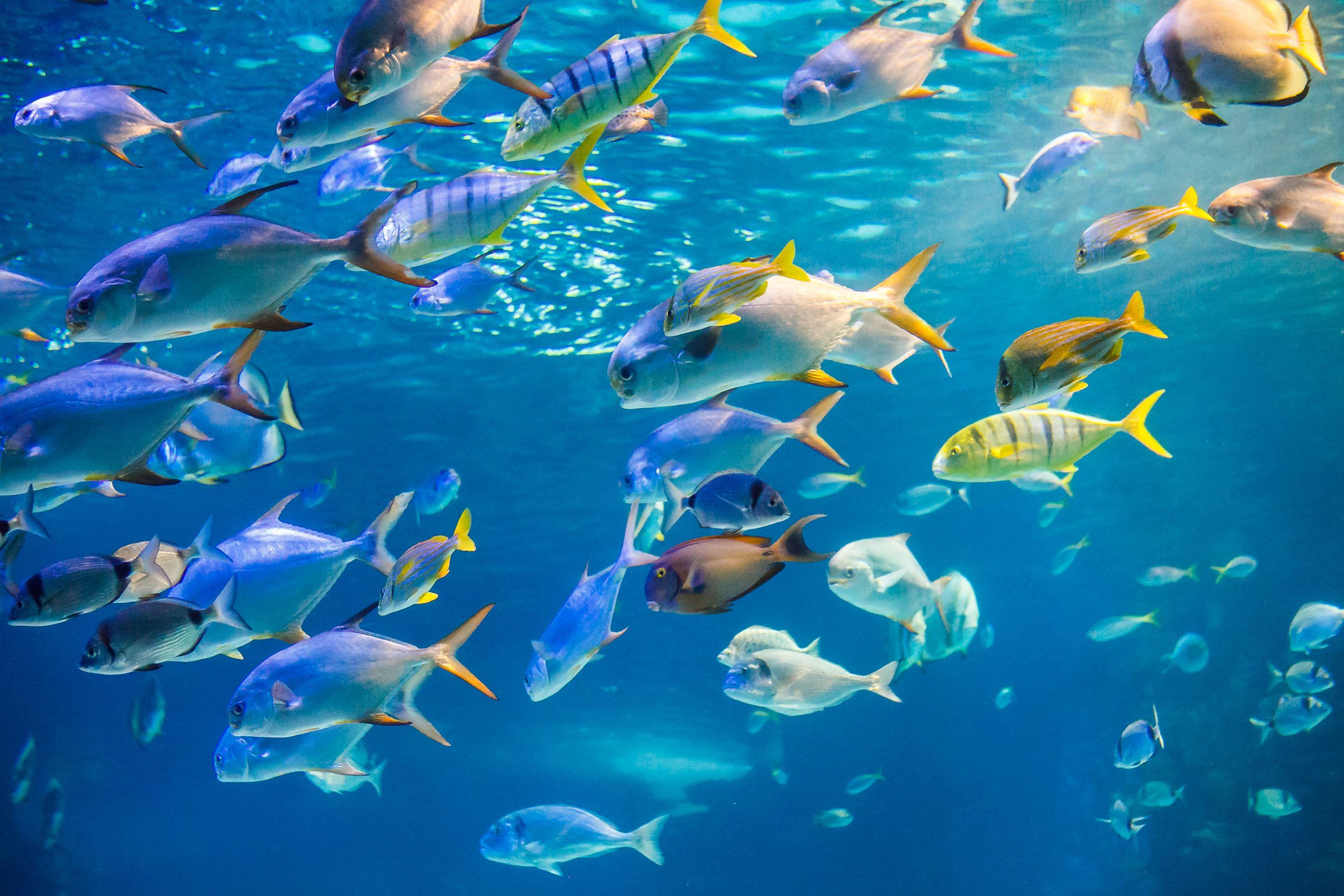 Ciência aposta em genes de peixe para regenerar corações