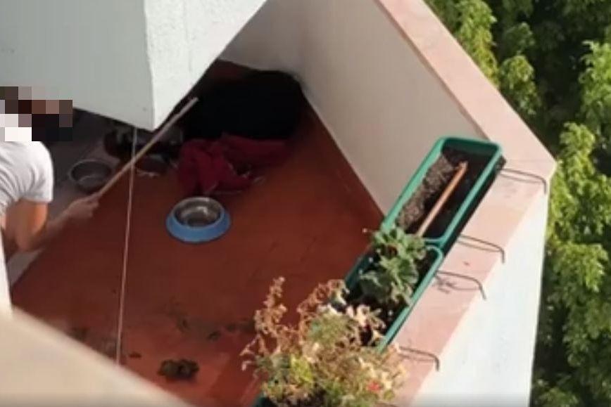 Mulher filmada a bater no cão queixa-se à polícia