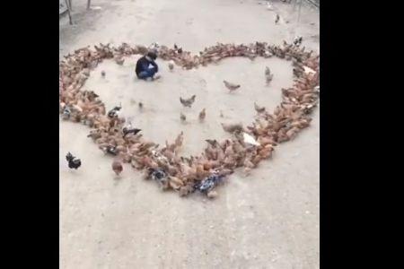 Jovem faz declaração de amor com ajuda de... galinhas