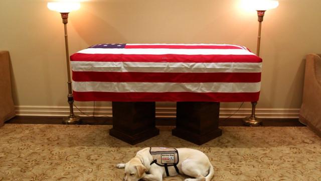 Sully, cão de acompanhamento de Bush, estará com o presidente até ao fim