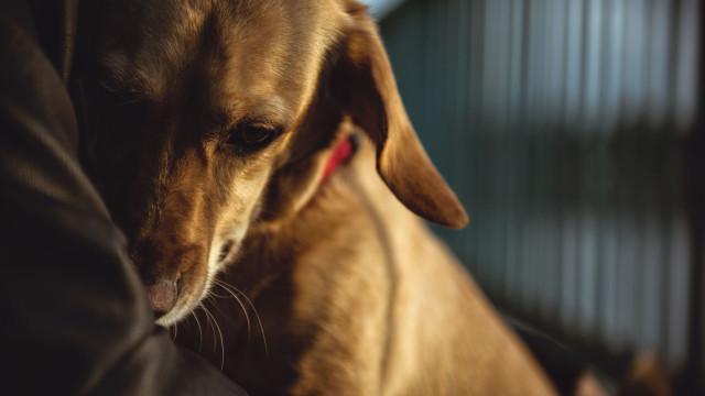 Cães podem aliviar sintomas de depressão, a ciência explica