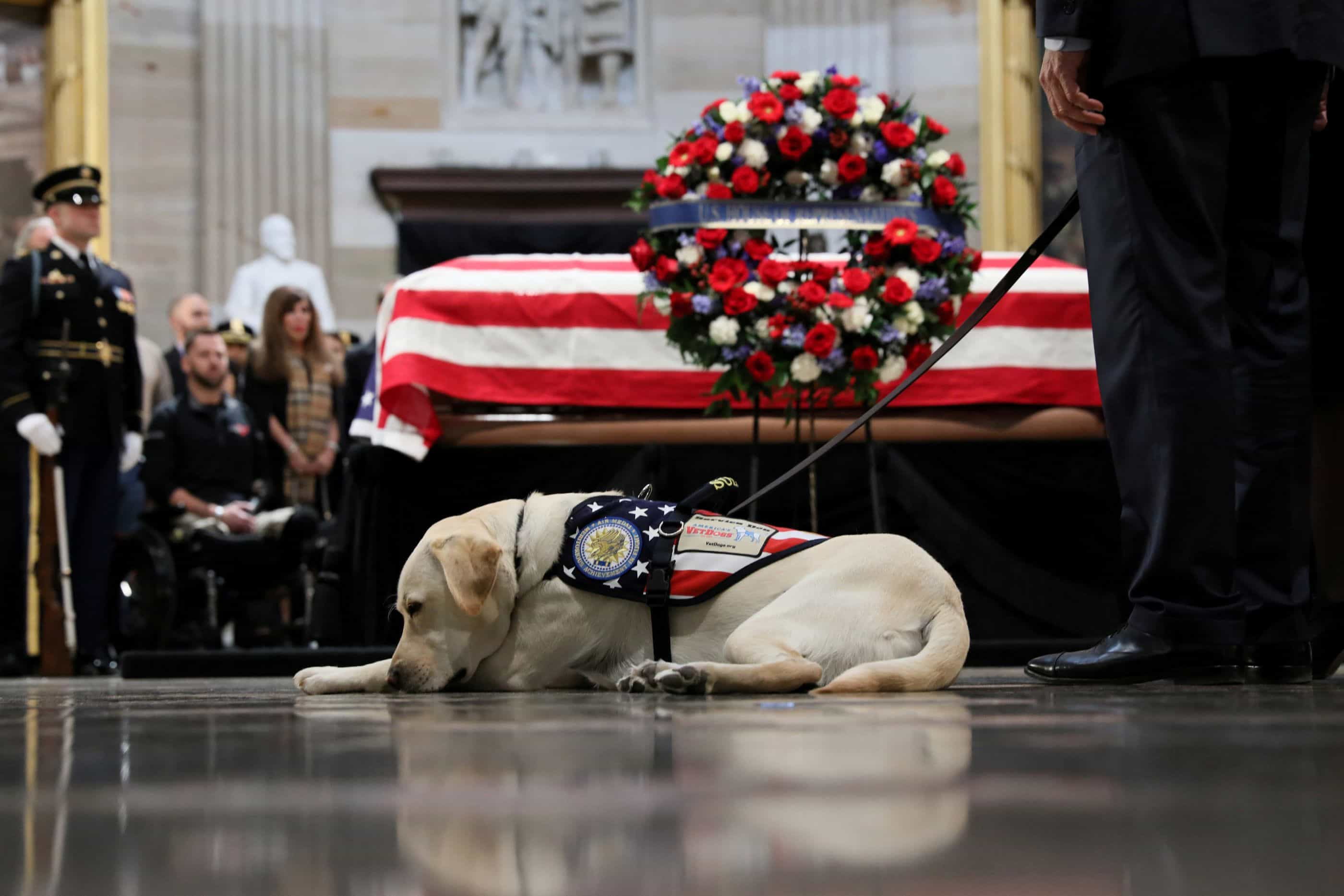 O luto de Sully, o cão do antigo presidente, no adeus a George H.W. Bush