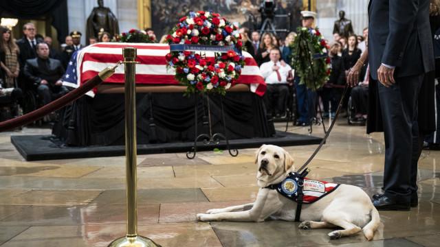 A coragem e bravura dos cães que ajudam a humanidade
