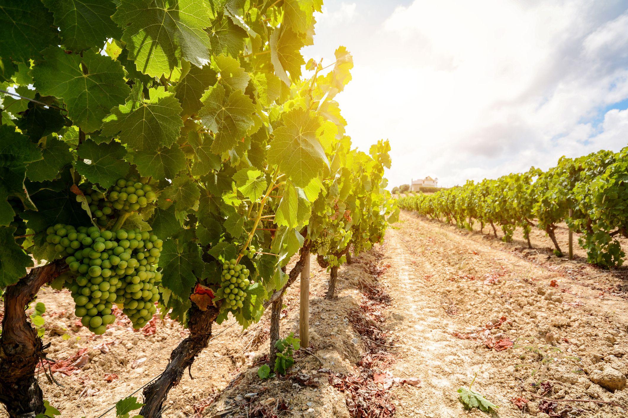 Grupo francês aposta (e entra) nos vinhos em Portugal