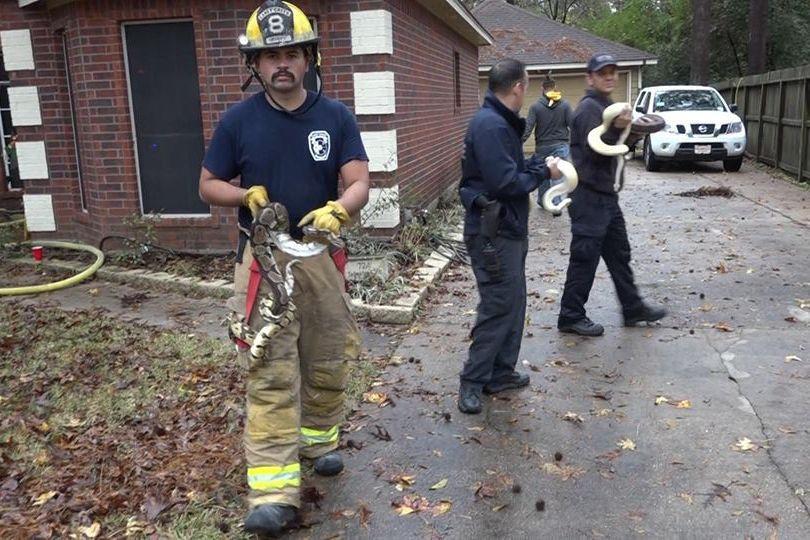 Bombeiros no Texas resgataram mais de 100 cobras de uma casa a arder