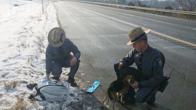 EUA: Camionista salva cães atirados de janela do carro em movimento