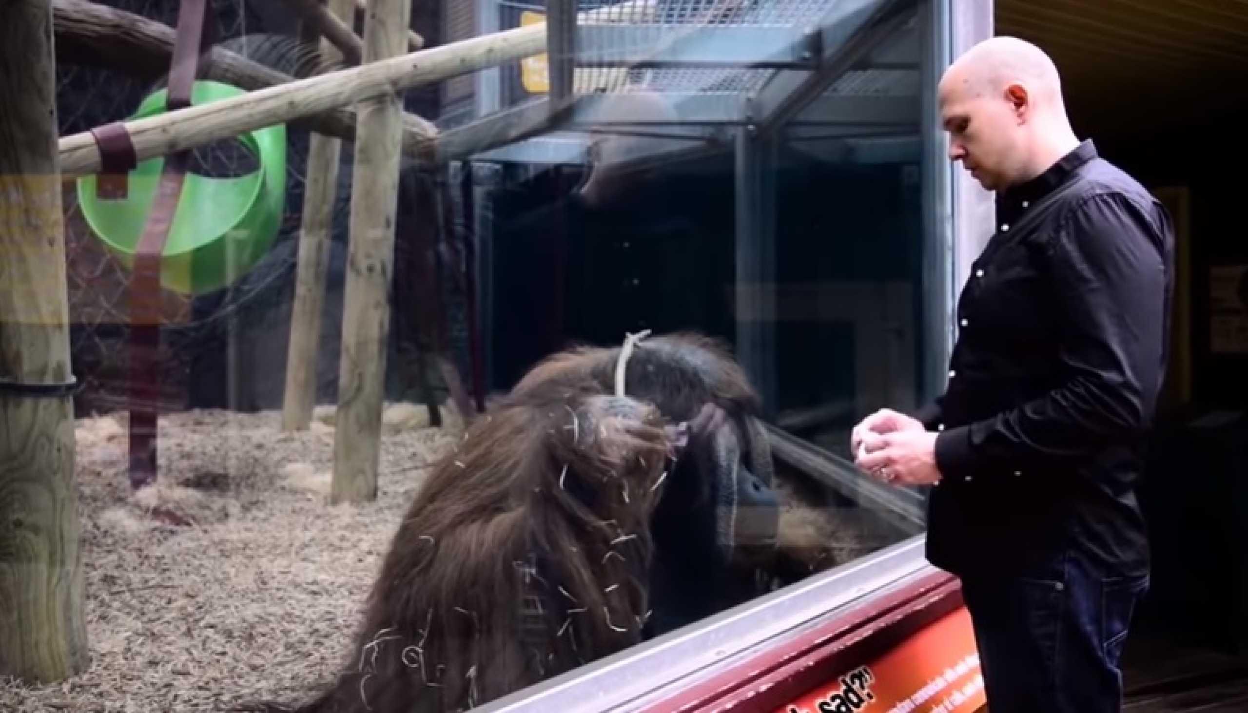 Mágico presta tributo a orangotango que brilhou num dos seus truques