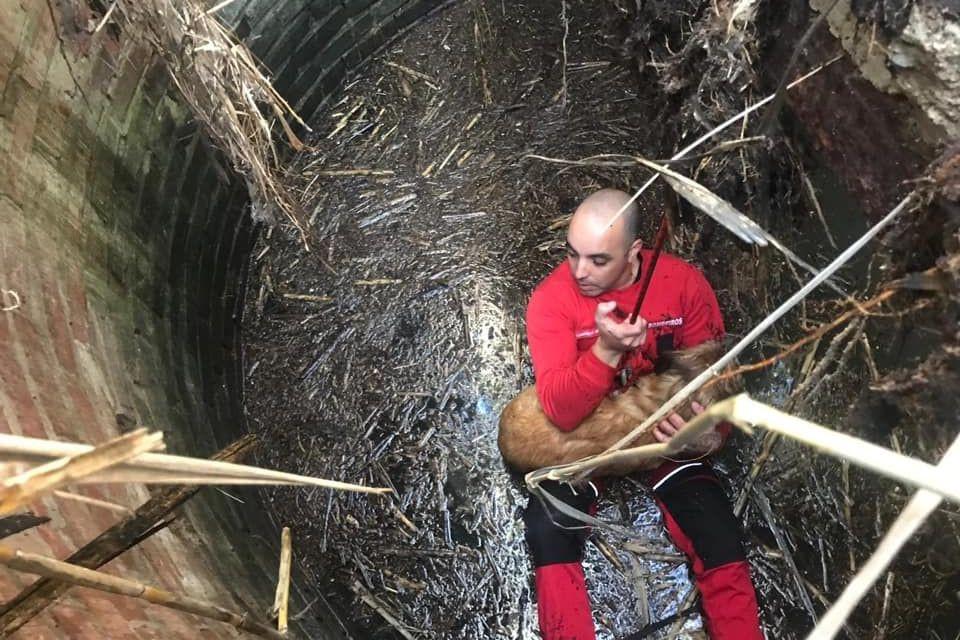 Bombeiros da Trafaria salvam cão de morrer afogado em poço