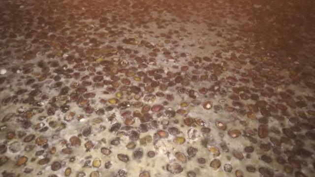 Apreendidas 124 toneladas de azeitona em Reguengos de Monsaraz