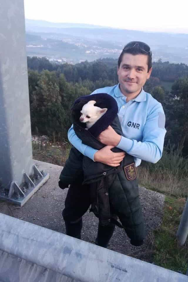 Cão resgatado na A42. Autoridades procuram donos