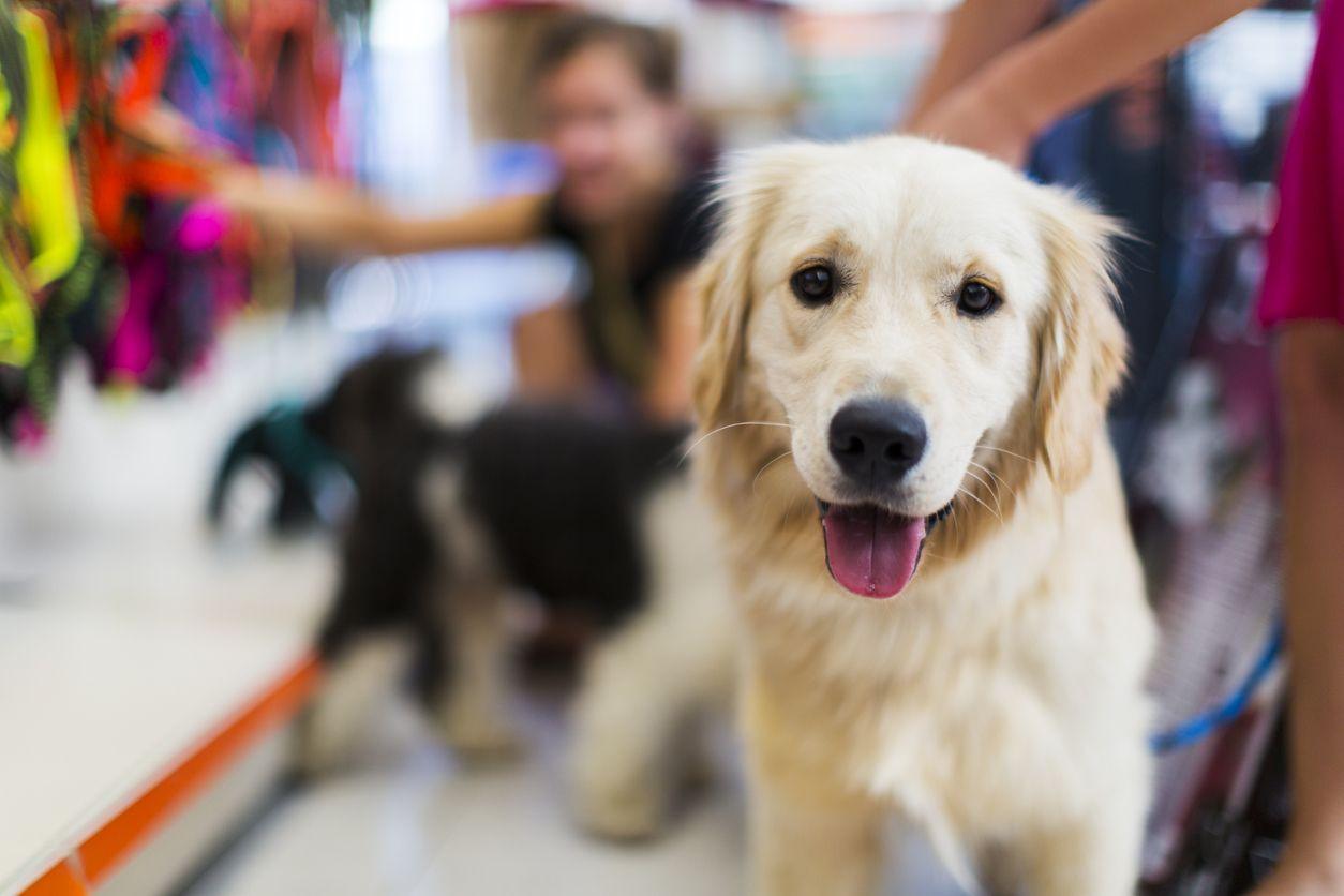 Califórnia: Lojas de animais passam a só poder vender animais resgatados