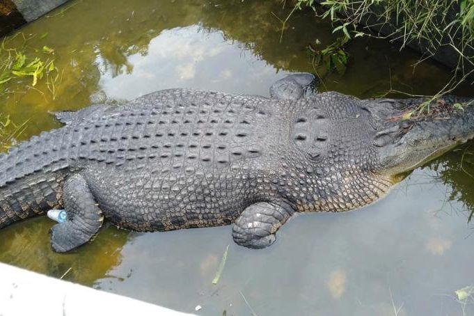Cientista comida viva por crocodilo na Indonésia