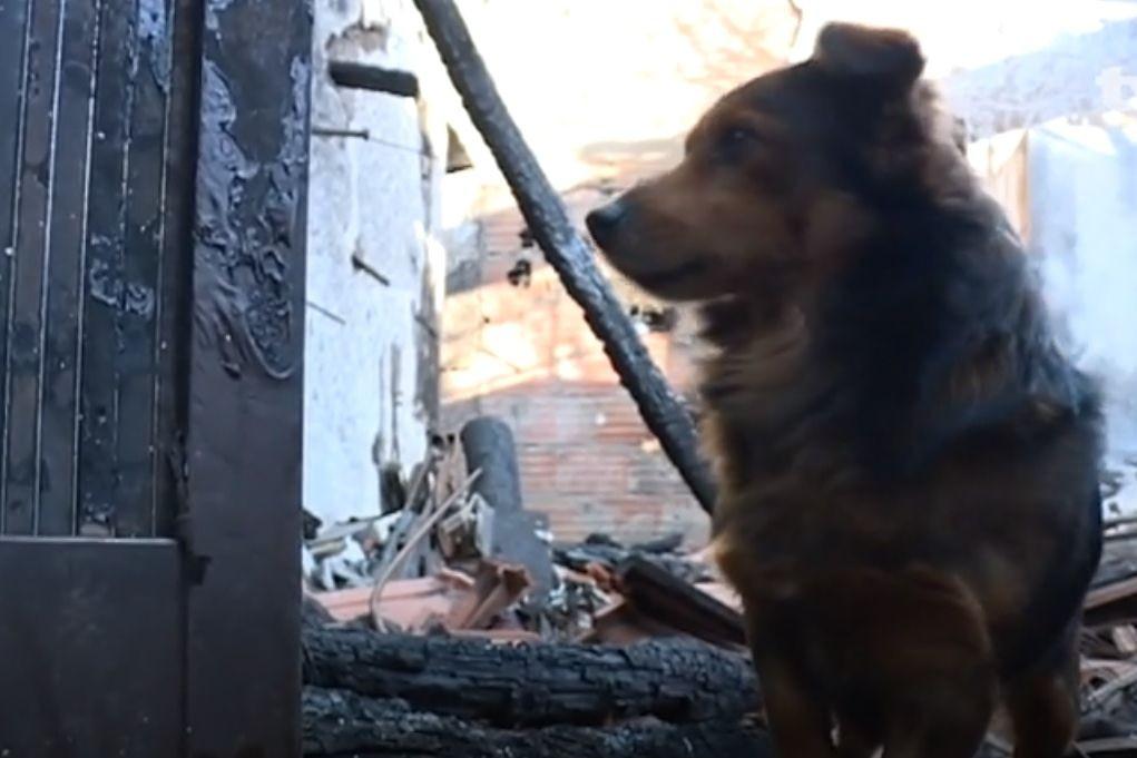 Lolita, a cadela que recusa deixar casa onde o dono morreu