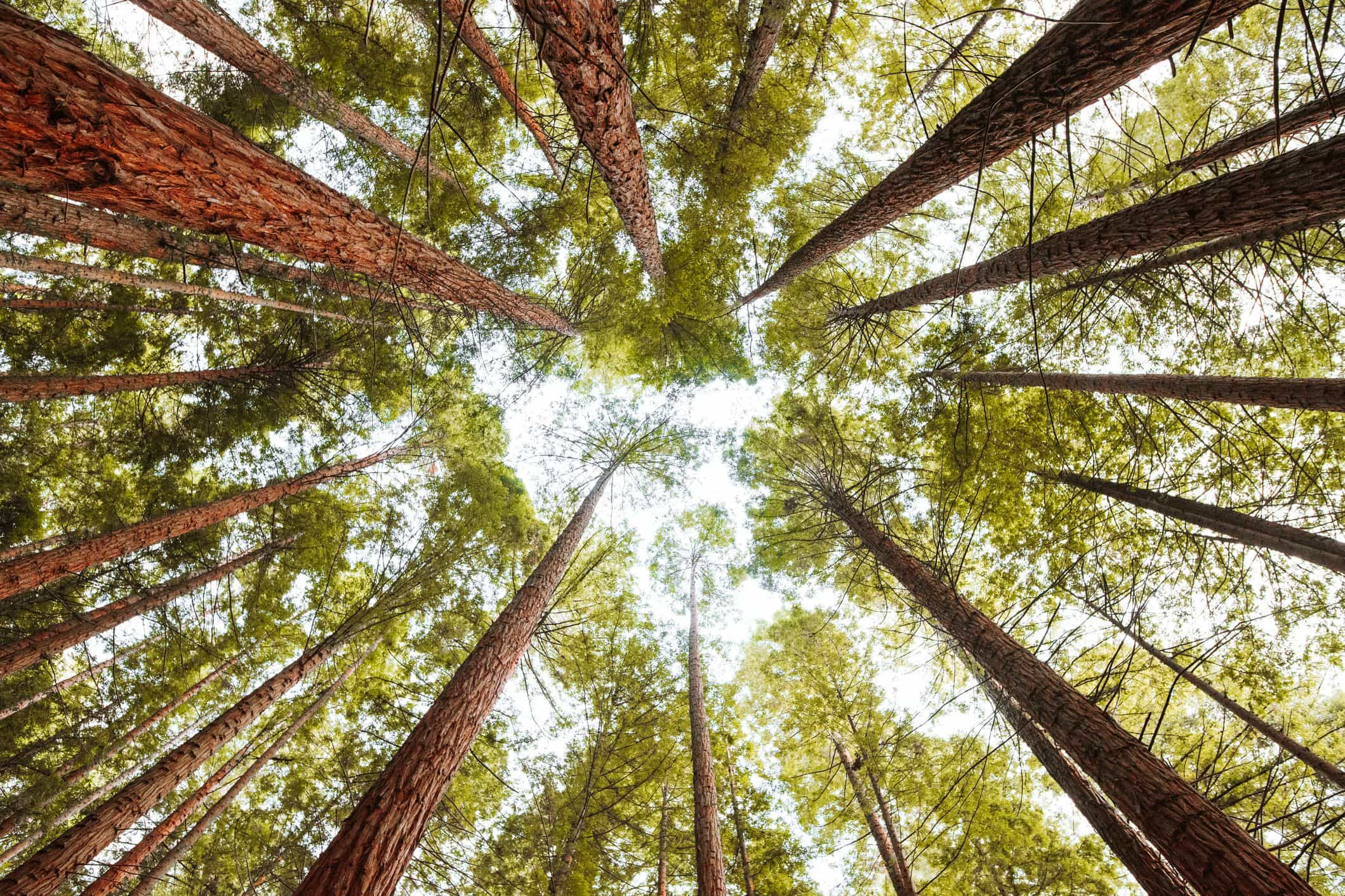 Governo tenta atrair jovens para profissões das florestas