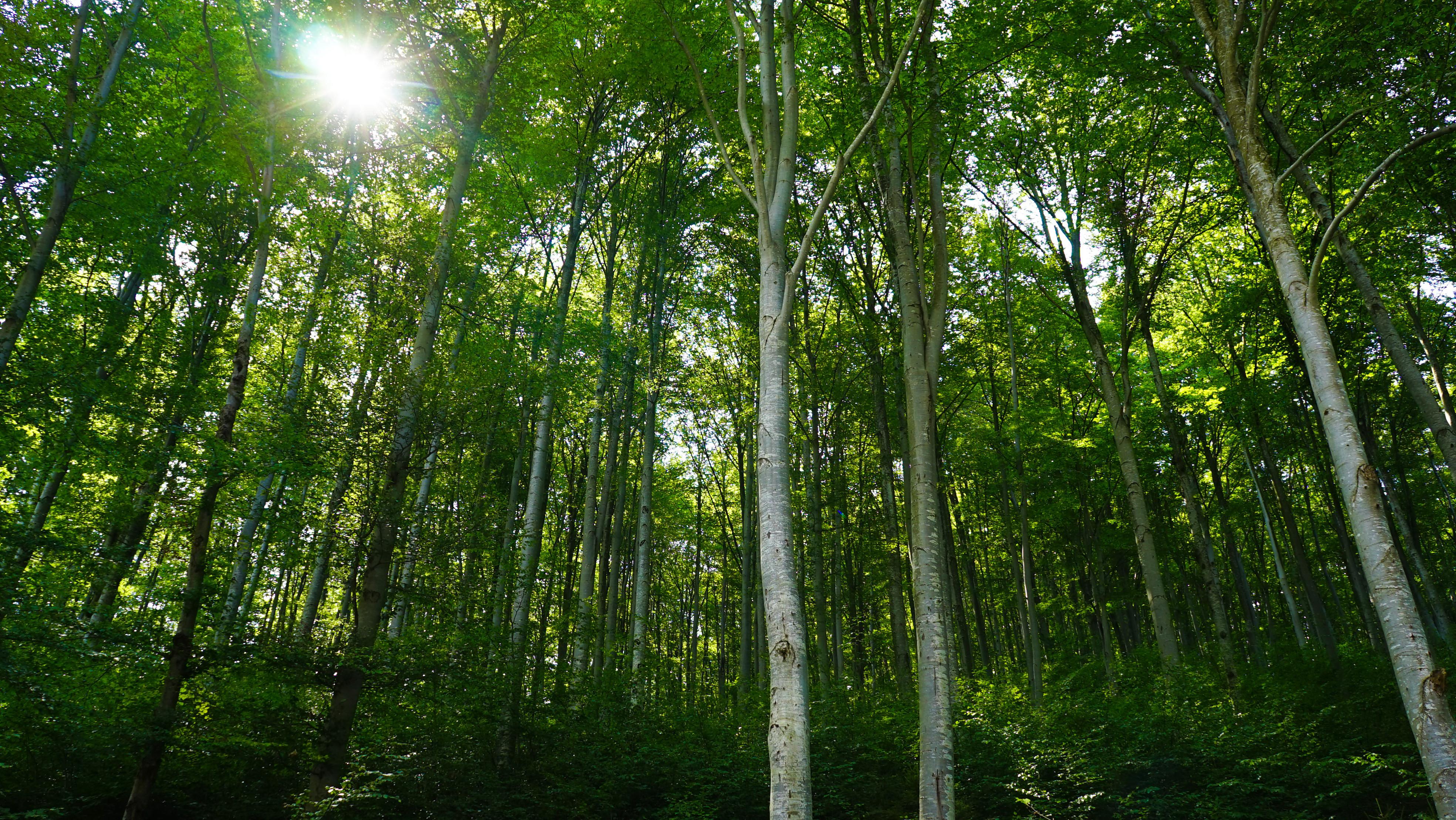 Apresentamos-lhe a floresta mais assustadora do mundo