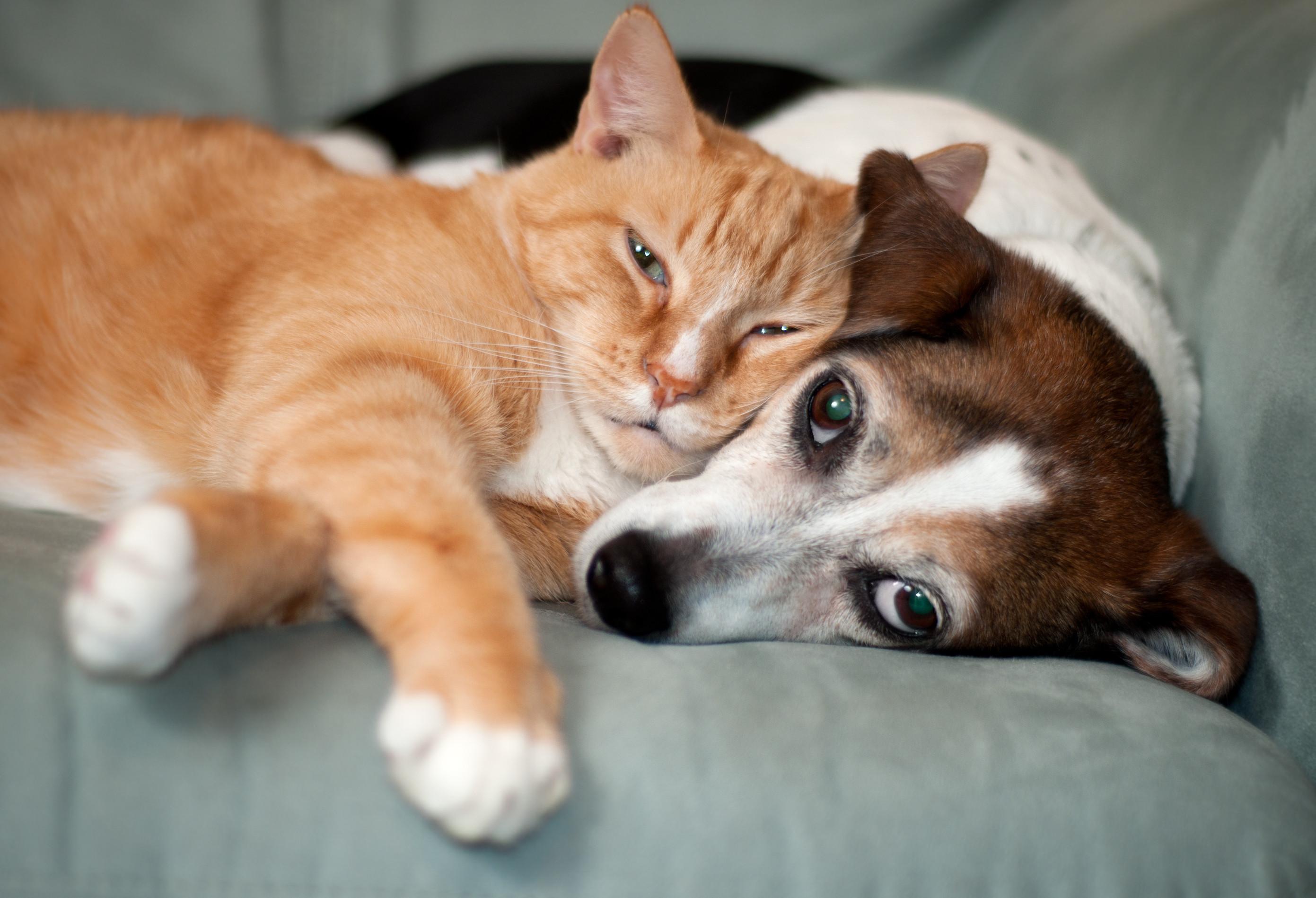 SABIA QUE o período da gravidez de uma gata ou de uma cadela é idêntico?