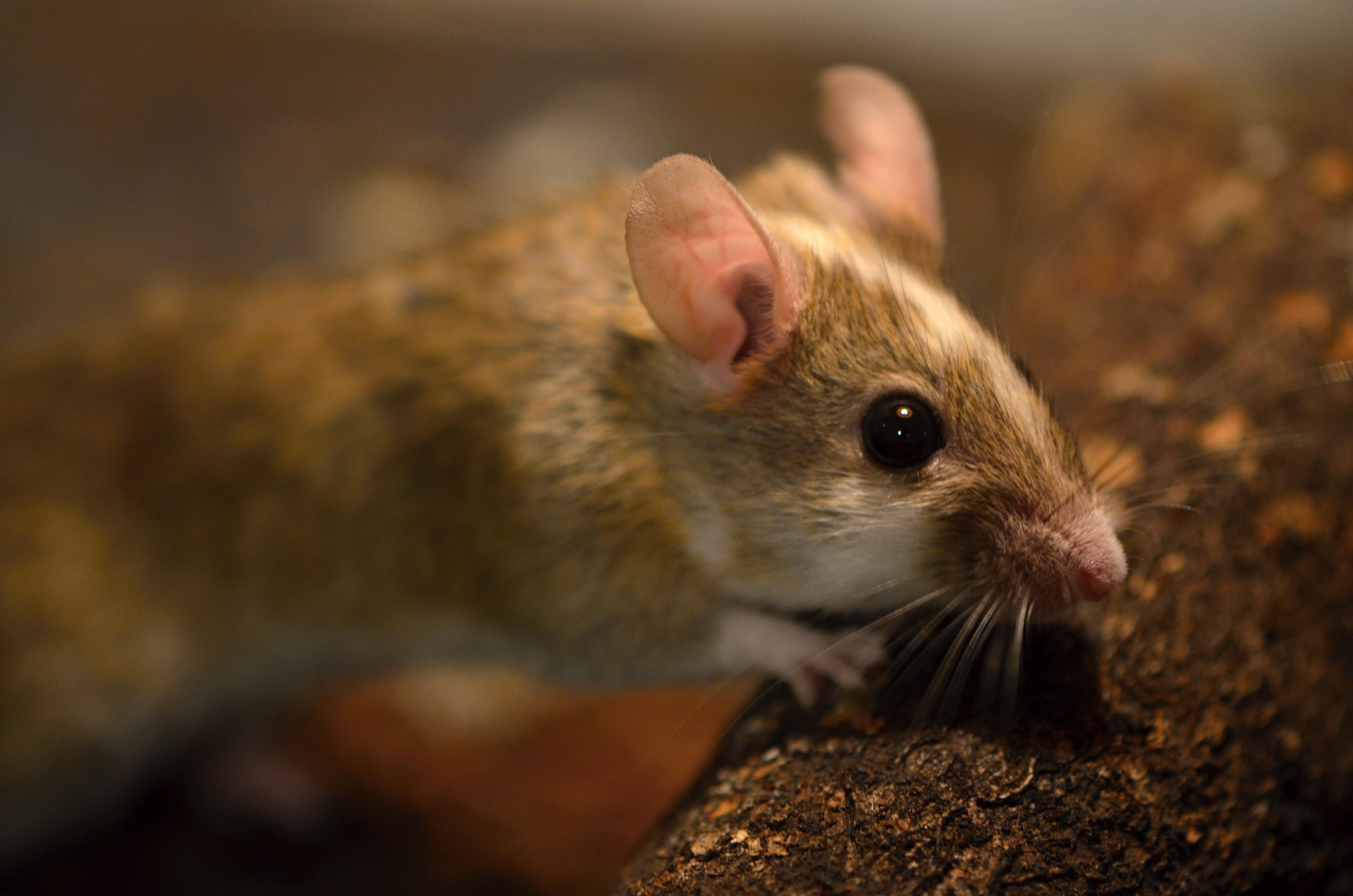 As doenças que os animais podem transmitir aos humanos