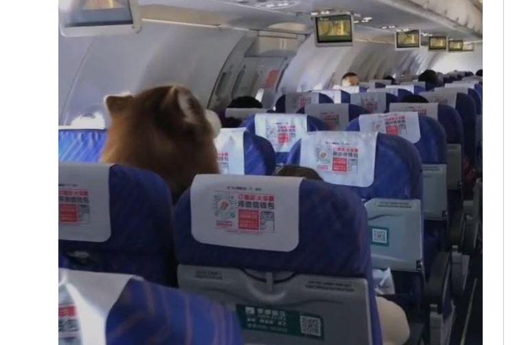 Cão de suporte emocional derrete corações num avião