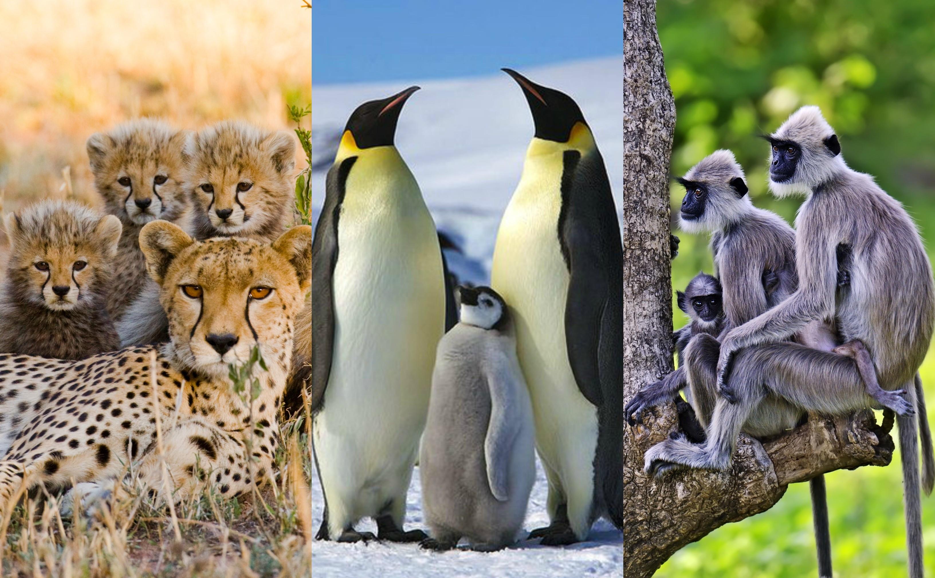 Adoráveis filhotes em perfeita comunhão com a família