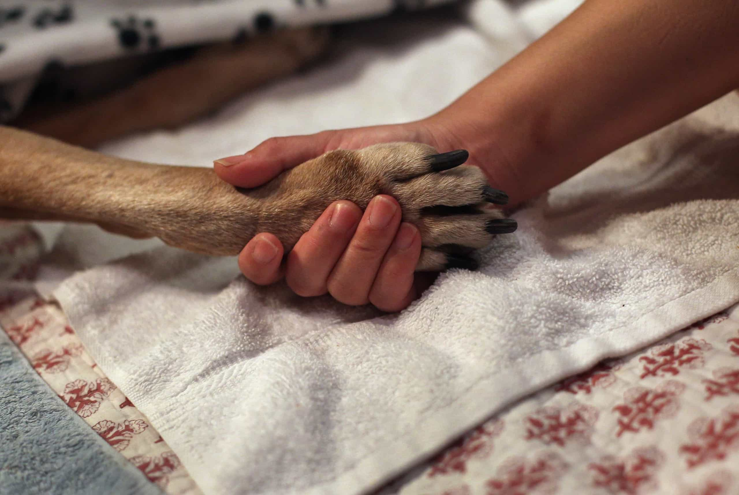 O duro momento da partida de um animal de estimação