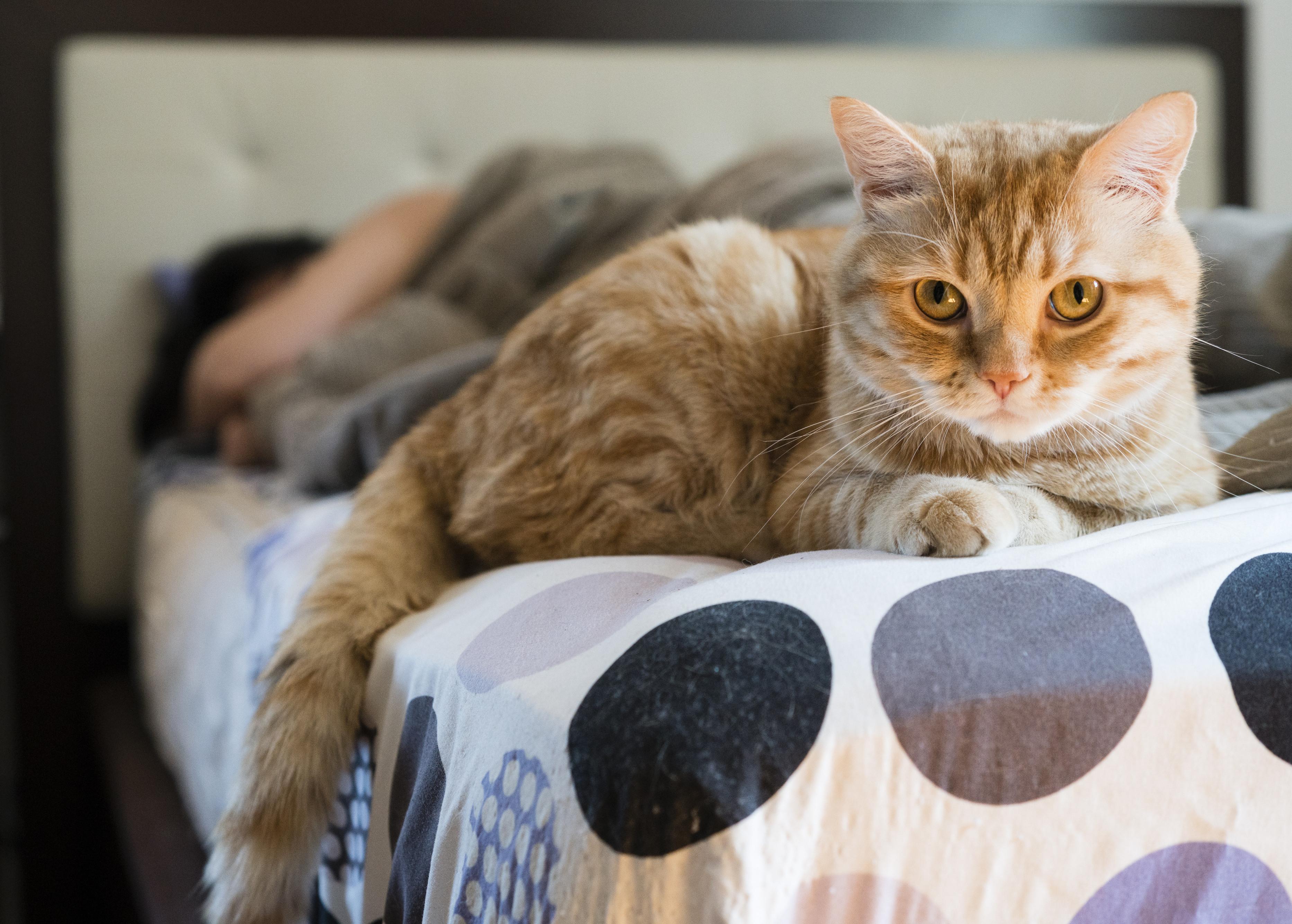 Seis atitudes dos donos que os gatos detestam. Está avisado