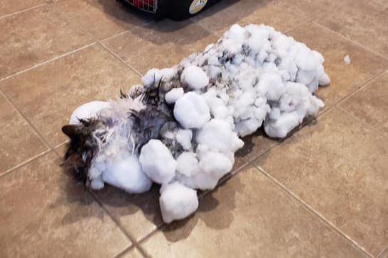 Gata teve de ser descongelada depois de ser encontrada debaixo de neve
