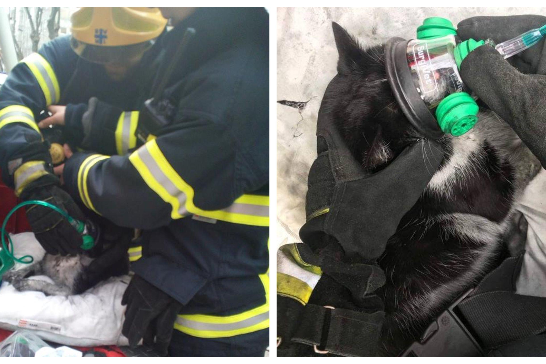 Bombeiros salvam gato da morte em incêndio em Matosinhos