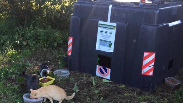 Cidade espanhola reutiliza contentores para dar casa a gatos abandonados