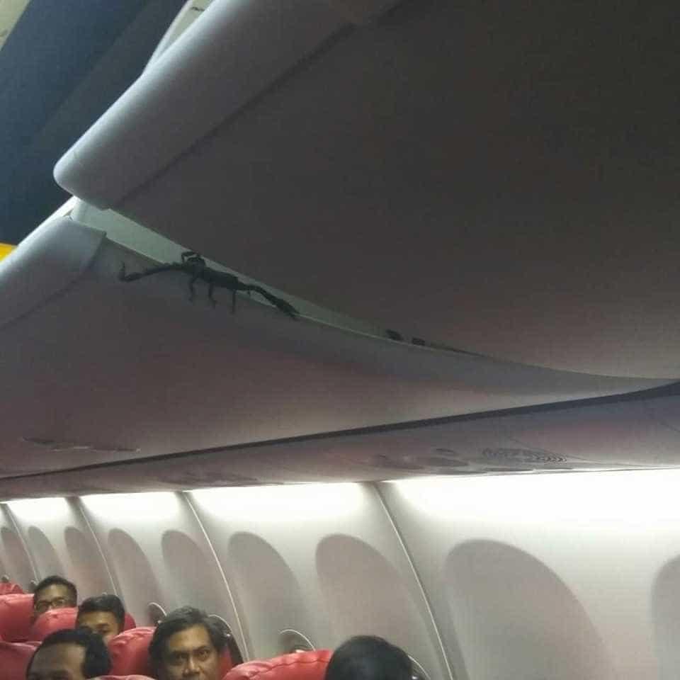 Escorpião causa pânico em voo da Lion Air. Eis as imagens