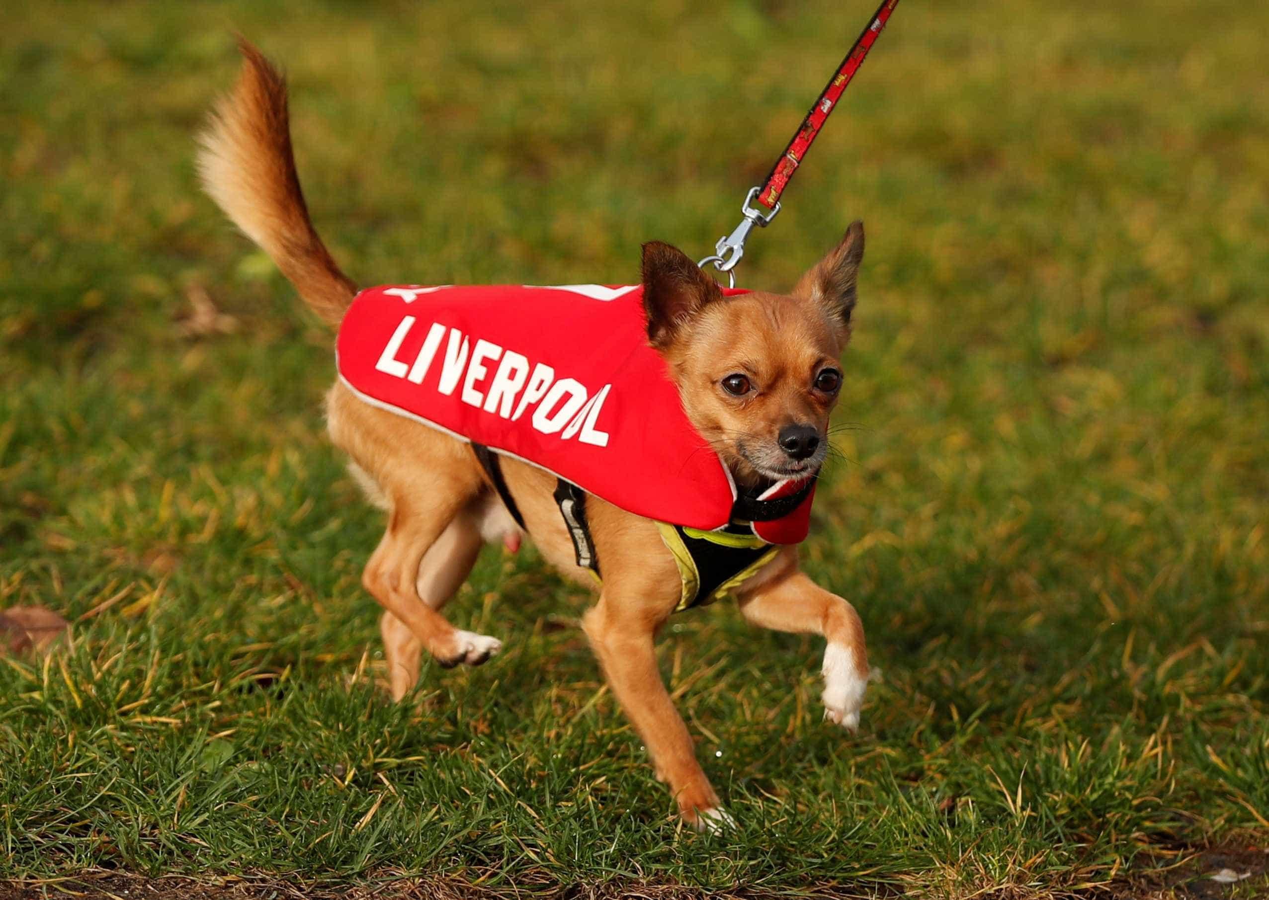 Os cães também vão ao futebol... e com indumentária a rigor