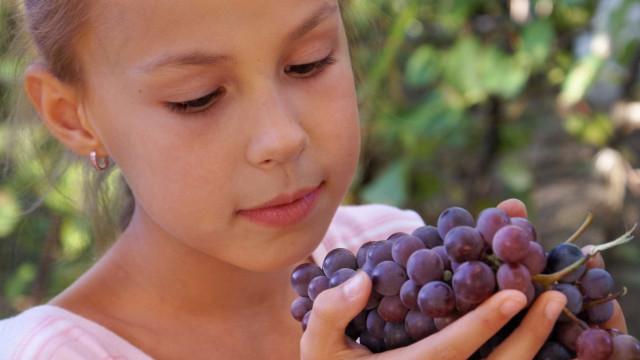 Essência do Vinho: Sete produtores à prova por uma boa causa