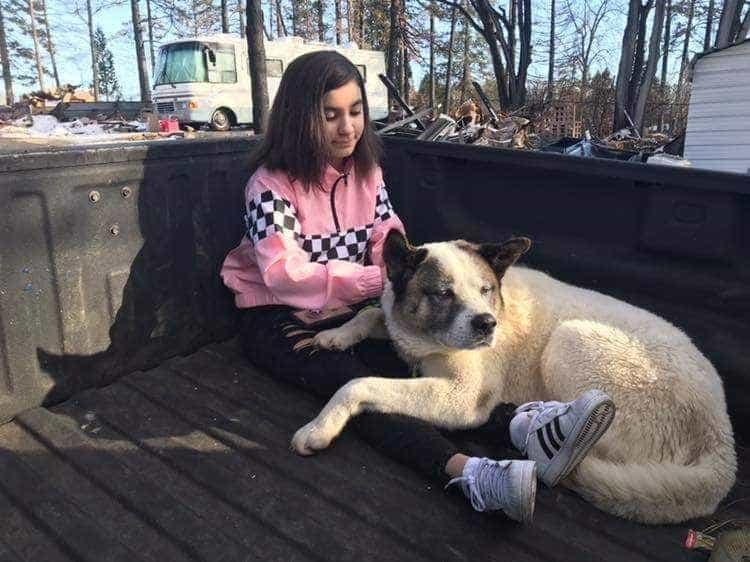 Cão reunido com família mais de 100 dias após incêndios da Califórnia