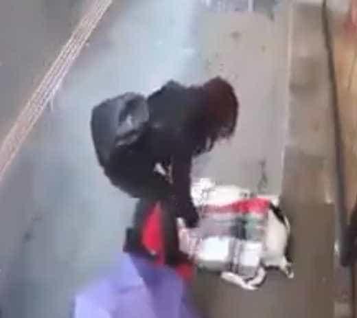 Mulher viu cão abandonado a tremer de frio e tapou-o com o cachecol