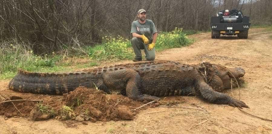 Crocodilo era tão grande que as pessoas julgavam tratar-se de um embuste