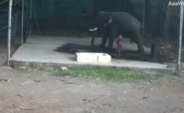 Tratador de elefantes morre depois de animal lhe cair em cima