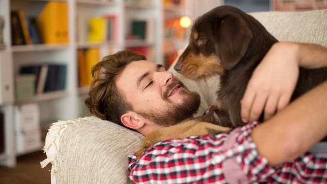 Químicos em casa podem deixá-lo infértil (e ao seu cão também)