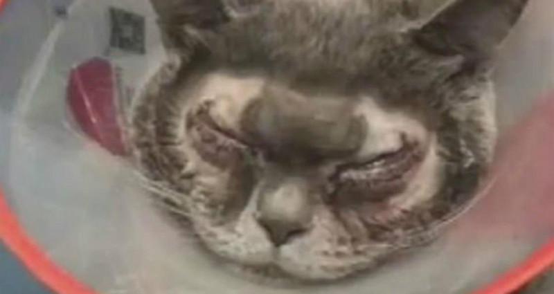 Mulher chinesa paga 1300 euros para fazer cirurgia plástica ao gato