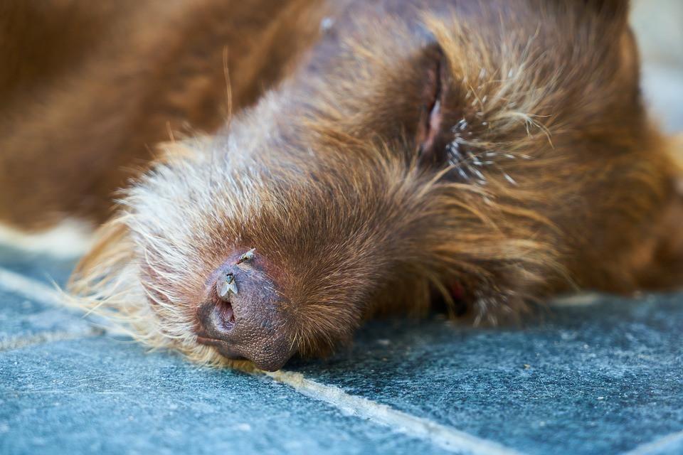Bloco quer esclarecimentos sobre cães envenenados em Camarate e Sacavém