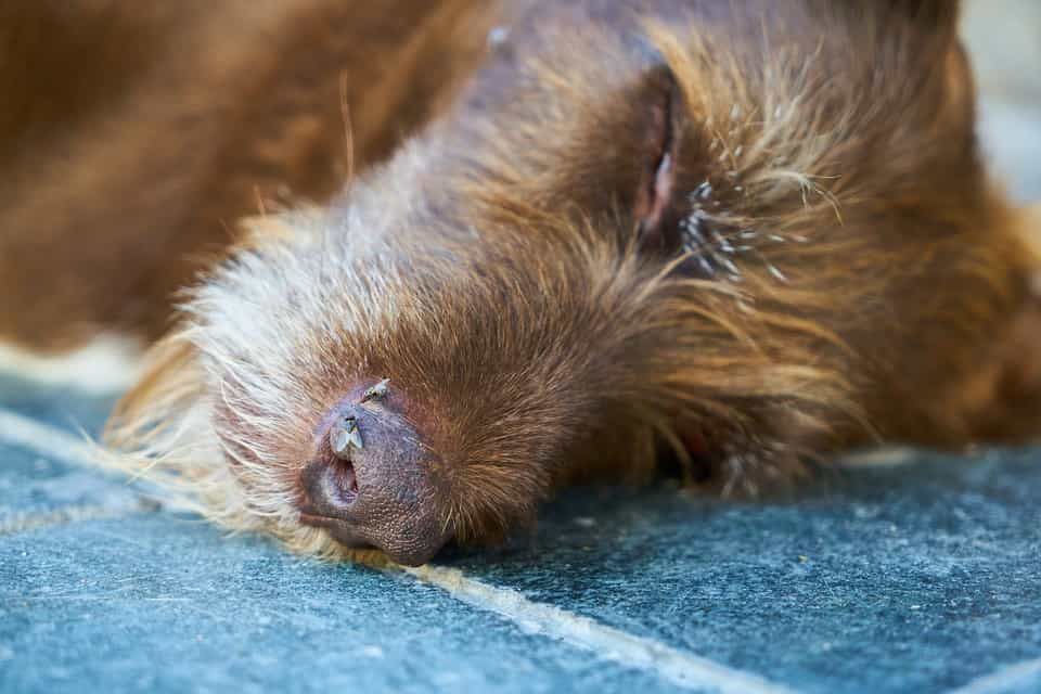 Dezassete cães drogados e largados no concelho de Loures