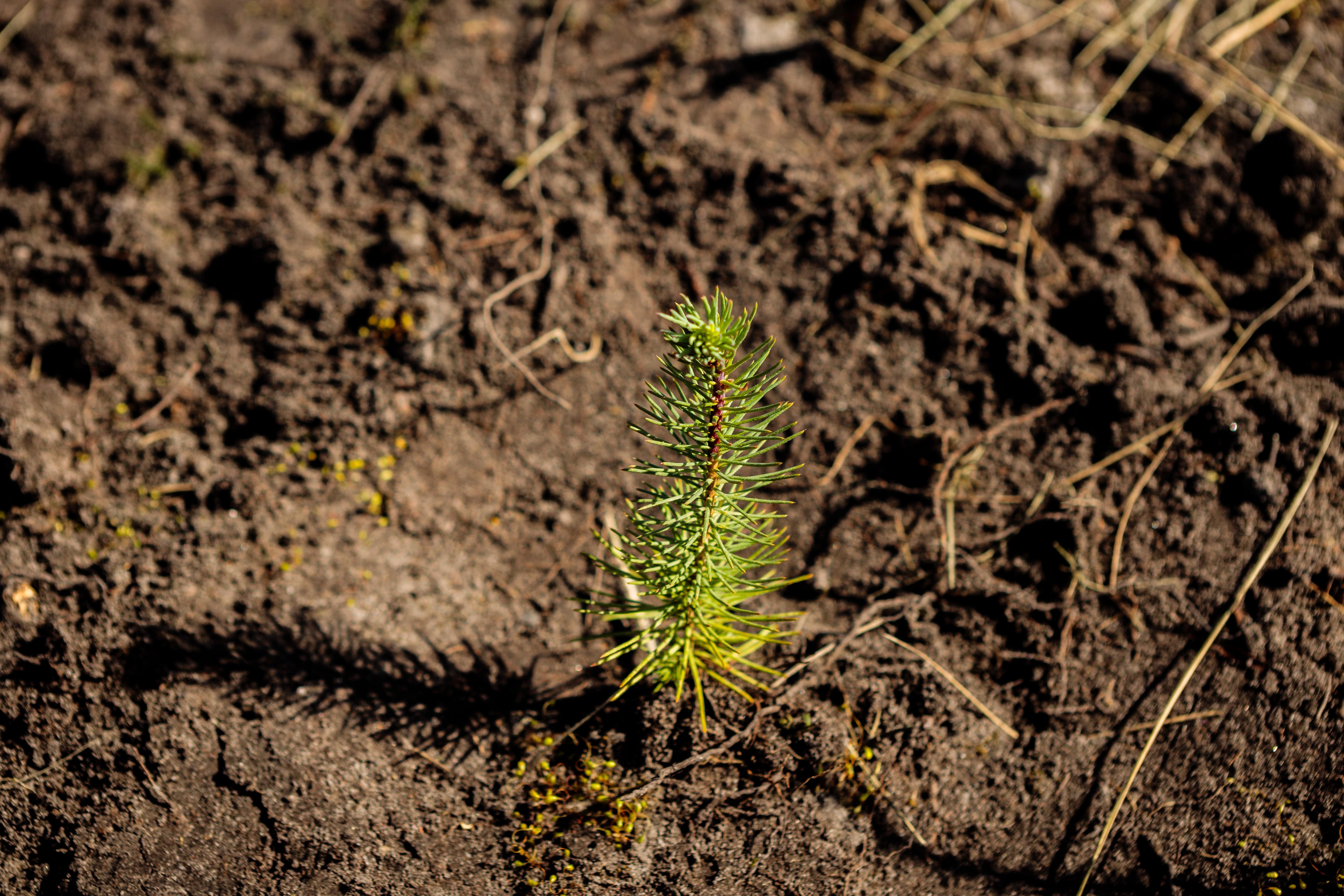 Sacoor Brothers planta 10 mil árvores no Pinhal de Leiria