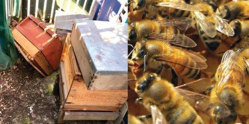 Ladrão foge após ser confrontado com enxame de 80 mil abelhas